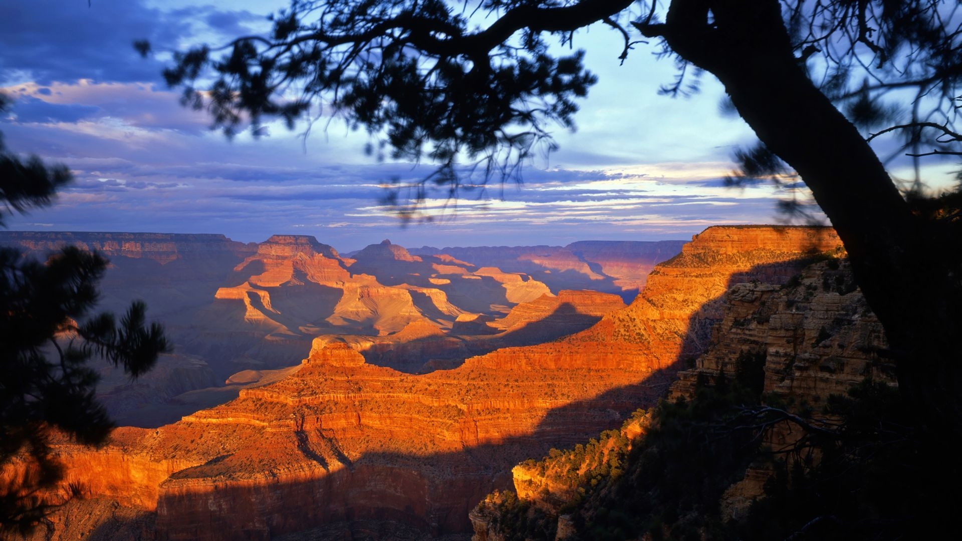 South Rim at sunset with tree in foreground