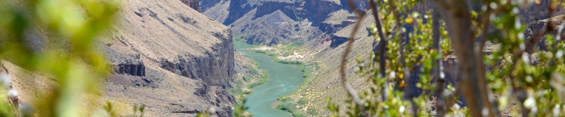 A rugged region of the North Canyon, surrounded by desert shrubs and nature.