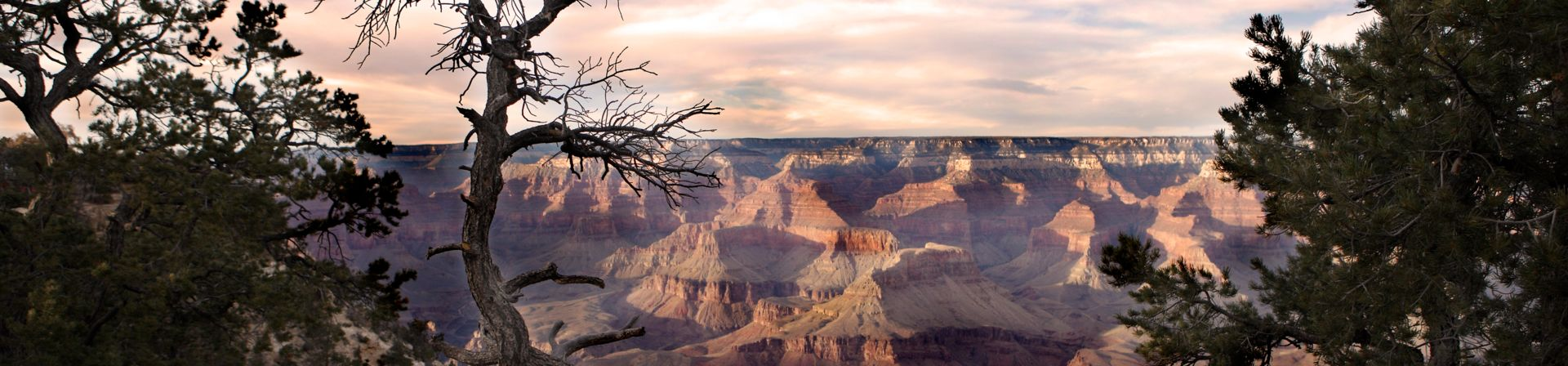 A panoramic Grand Canyon South Rim tour viewpoint seen at sunset, with a tree in the foreground.