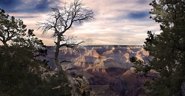 A cloudy sky over the Grand Canyon with tree branches in the foreground.'