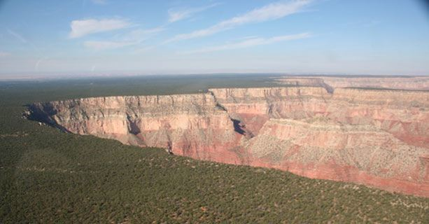 A sight of the Grand Canyon's edge, lined by the Kaibab National Forest.'