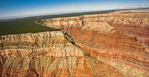 A region of the Grand Canyon blanketed by the Kaibab National Forest.
